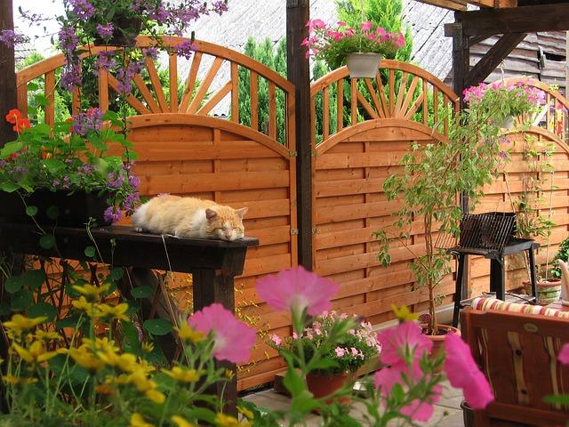 venkovní terasa se spící kočkou